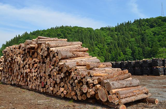 樹種による薪の違い