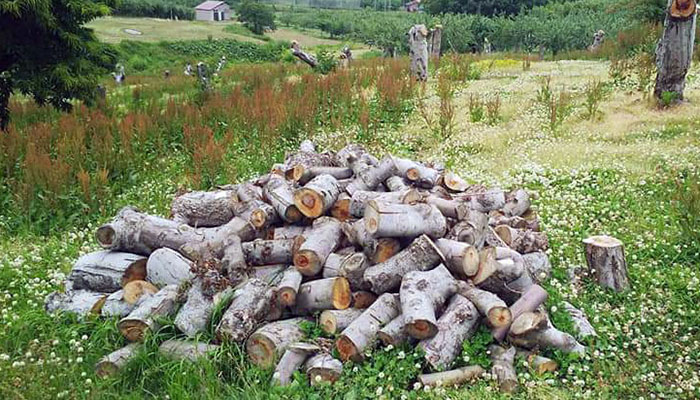 広葉樹薪「白神の炎」20kg